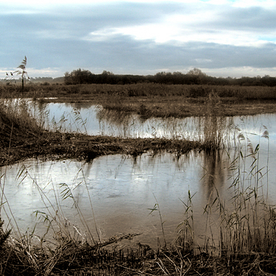 Sunday January 8th (2006) Shapwick Heath width=
